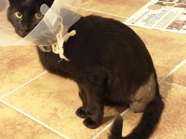 Ranjeni mačak NK Mladost