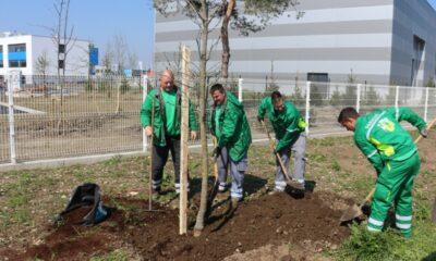 Drveće sadnja Jalkovečka Čehok lopata